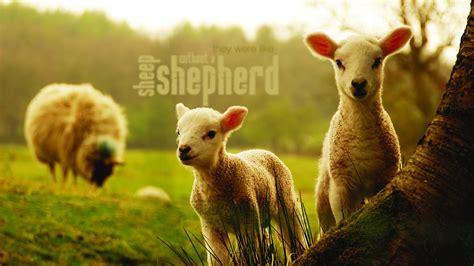 shepherd christian wallpapers