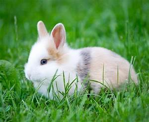 Comment Savoir Si Une Voiture Est Volée : comment savoir si mon lapin est un m le ou une femelle ~ Medecine-chirurgie-esthetiques.com Avis de Voitures