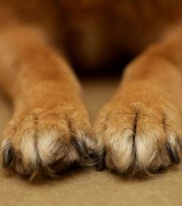Hotel Pour Chien : ta wan des h tels de luxe pour chiens ~ Nature-et-papiers.com Idées de Décoration