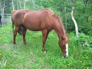 Companion Mare in Alberta - UPDATED
