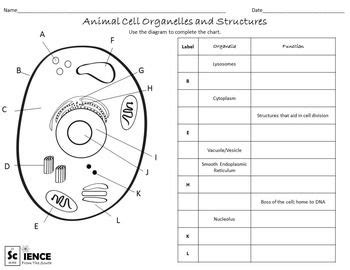 plant and animal cells worksheets for middle and high school students bryson plant animal