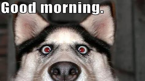 Funny Picture Meme - 16 hilarious husky memes you ve been missing in your life