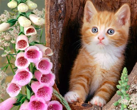 Free Animated Cat Wallpaper - baby cats wallpapers 76