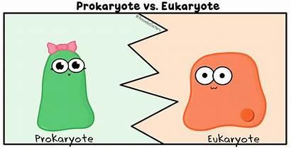 Amoeba Sisters Science Cell Prokaryote Gifs Jokes