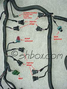 95 Camaro Lt1 Wire Harness  95  Free Printable Wiring