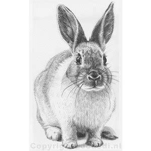 drawn bunny realistic pencil   color drawn bunny