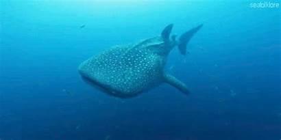 Shark Whale Better Gifs Sharks Fuck Saying