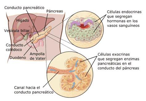 q es el cancer de pancreas 191 qu 233 es el c 225 ncer de