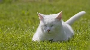 Was Brauchen Katzen : katzenhaltung so f hlt sich ihre katze wohl ~ Lizthompson.info Haus und Dekorationen