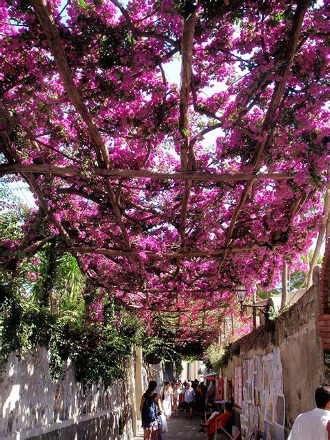 worlds  marvelous streets shaded  flowers