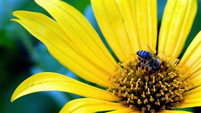 Flowers Wallpapers 1080p Widescreen Flower Yellow 1080