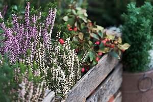 Balkonkästen Winterhart Bepflanzen : balkonk sten winterhart bepflanzen diese pflanzen ~ Lizthompson.info Haus und Dekorationen