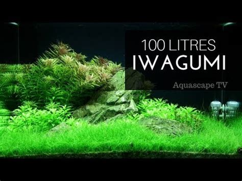 setup aquascape 100 litres iwagumi planted tank setup aquascape tv