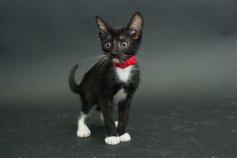 fotografio gatos negros de  albergue   los adopten