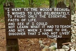 A (Transcendent... Thoreau Book Quotes