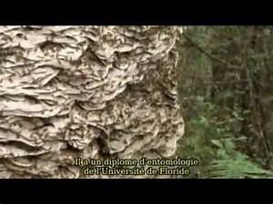 Détruire Un Nid De Guêpes : nid de gu pes norme youtube ~ Melissatoandfro.com Idées de Décoration