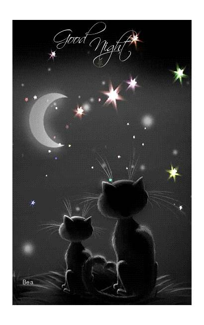 Night Goodnight Gifs Cat Sweet Quotes Animation
