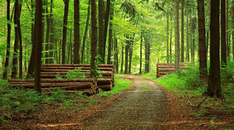 forest product chain  custody certification