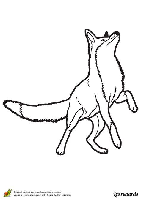 cour de cuisine gratuit en ligne coloriage renard realiste sur hugolescargot com