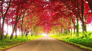Road, Between, Red, Autumn, Trees, During, Daytime, Hd, Nature