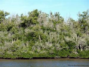 Everglades National Park (Gulf Coast) - HawkeBackpacking.com