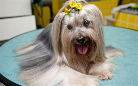 Maybe you would like to learn more about one of these? Bonito pra cachorro: produtos para cabelos conquistam os ...