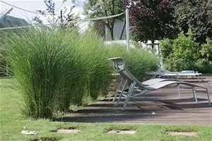 Balkon Sichtschutz Gras : gr ser sichtschutz terrasse und gartengestaltung pinterest ~ Michelbontemps.com Haus und Dekorationen