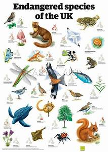Endangered Animal Clip Art World – Cliparts