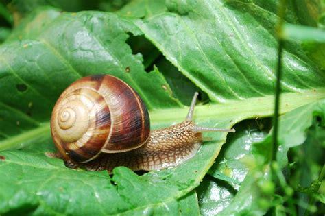 slakken luizen en ander ongedierte in de tuin bestrijden - Luizen Bestrijden In Huis