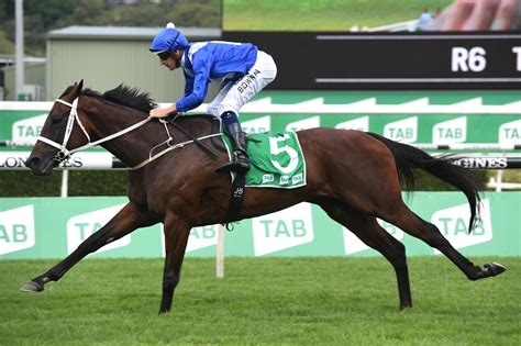 winx horse norton chipping race greatest stakes horses racing racenet field becomes form winning tips guide
