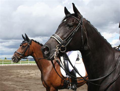 Quailhurst Hosts Oregon Horse Country Media Event