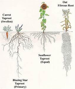 Bader Marafie  Blog 1 Plants