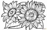 Sunflower Coloring Sunflowers Pages Printable Flower Flowers Supercoloring Adults Adult Sheets Clipart Drawing Svg Books Cute Floral sketch template
