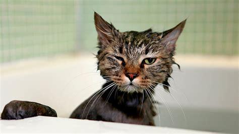 Cat Bath #7 Youtube
