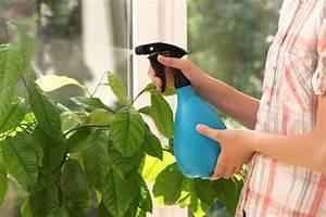 Comment Se Débarrasser Des Pucerons : comment se d barrasser des pucerons marre des pucerons ~ Dallasstarsshop.com Idées de Décoration