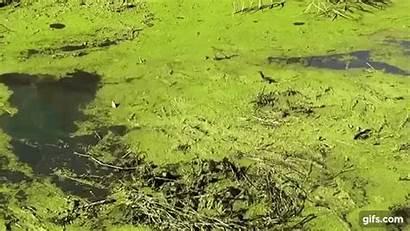 Algae Power Gifs Animated