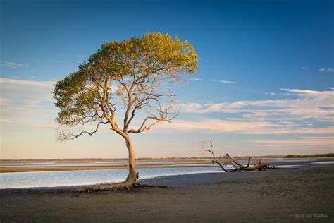 Mangrove Ben Messina Landscape And Nature Photography