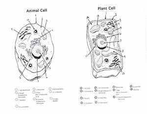 Plant Cell Diagram Worksheet Diagram Gallery