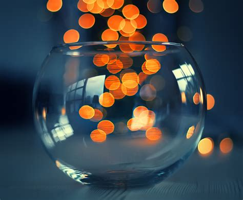 15 beautiful tips and exles of bokeh photography