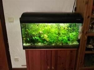 Komplett Aquarium Kaufen : komplett aquarium 80x40x30 cm zu verkaufen in koblenz fische aquaristik kaufen und verkaufen ~ Eleganceandgraceweddings.com Haus und Dekorationen