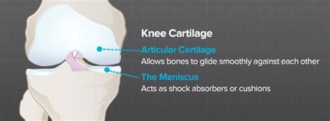 knee cartilage brainlaborg