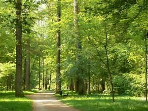 Bilder Vom Wald : der wald ruft bei outdoor ~ Yasmunasinghe.com Haus und Dekorationen