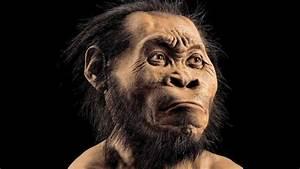 Australopithecus who? Homo naledi is related to me? - CNN