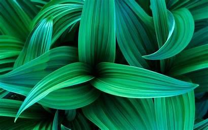 Plant Grass Leaves Strip Shape Wallhere Wallpapers