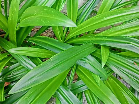 green foliage outdoor plants long green leaf plants theleaf co