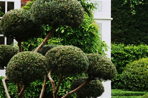 Topiary Gallery  Garden And Landscape Designgarden And
