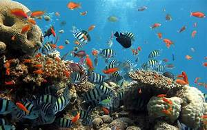 wallpapers: Ocean Life Wallpapers