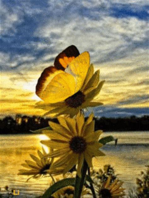 gif anime fleurs et de papillons page 5
