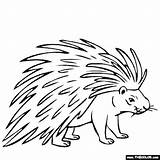 Porcupine Coloring Drawing Pages Animals Printable Line Animal Thecolor Easy Drawings Preschool Getdrawings General Getcolorings Results Got sketch template