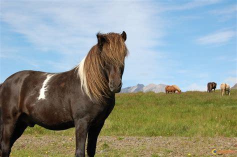 Itot du Chteau, un crack au grand coeur - Equitation pour